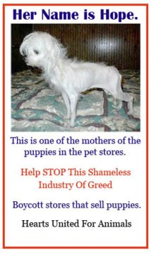 Join The Fight Against Puppy Mills Please Help Poor Doggies